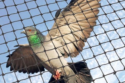 birdnet1